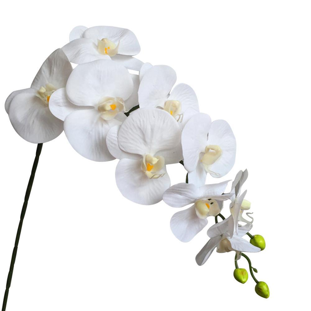 Latex Phalaenopsis Orchid