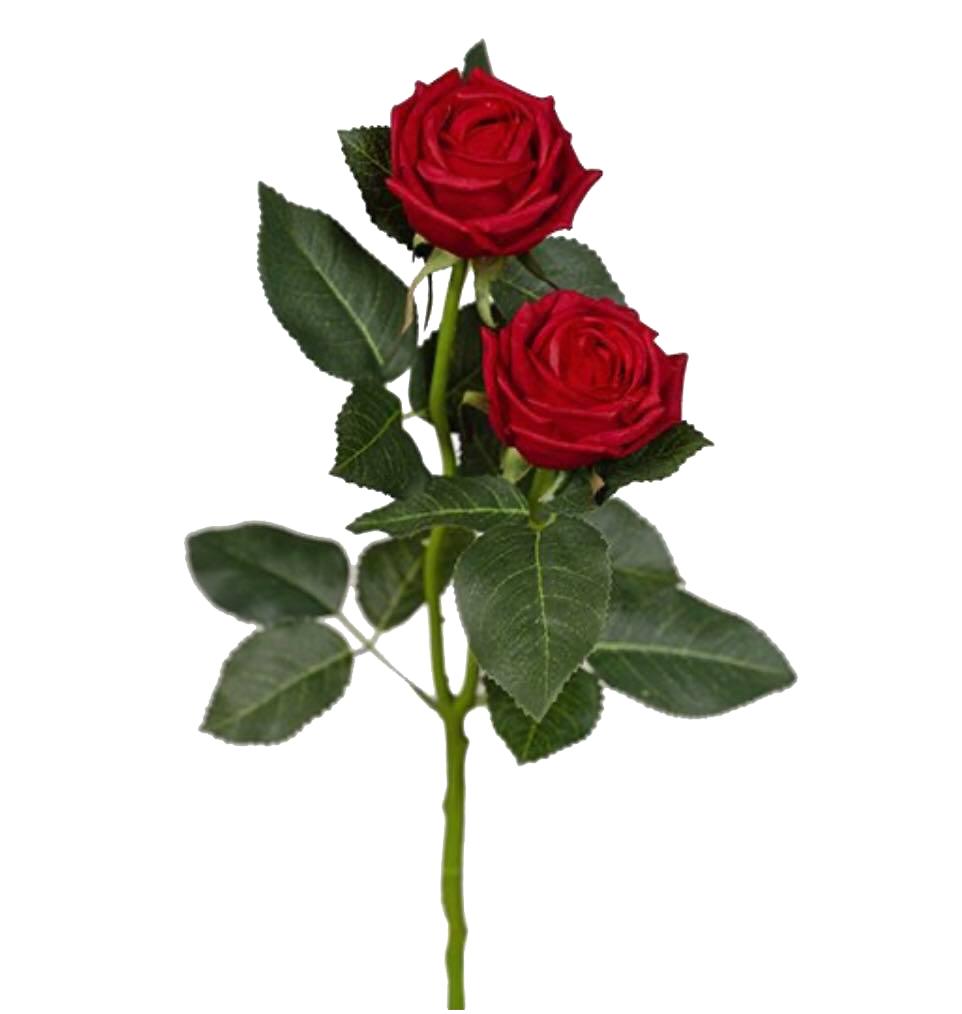 Deep Red Rose Spray